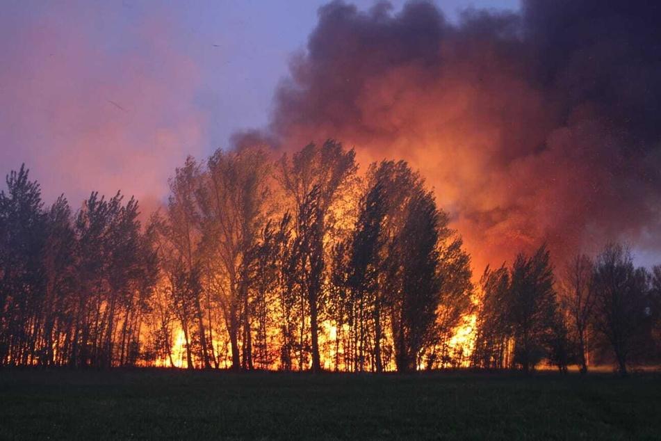 Im Stadtpark Schönauer Lachen in Leipzig kam es am Dienstagabend zu einem Flächenbrand.