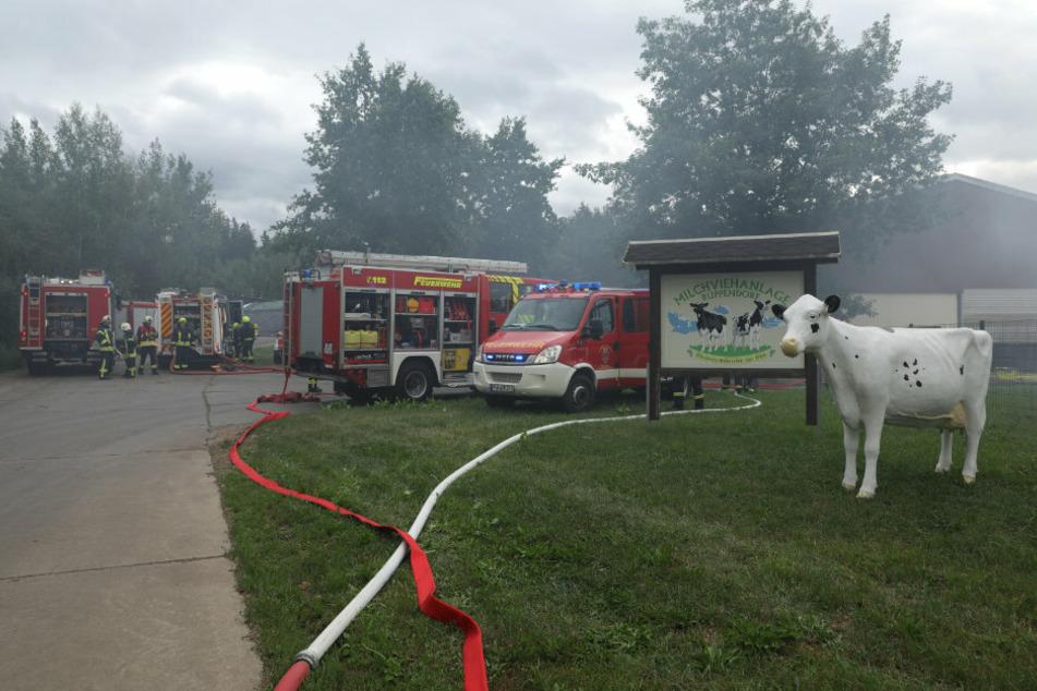 Zahlreiche Wehren vor Ort versuchen, dass Feuer zu löschen.