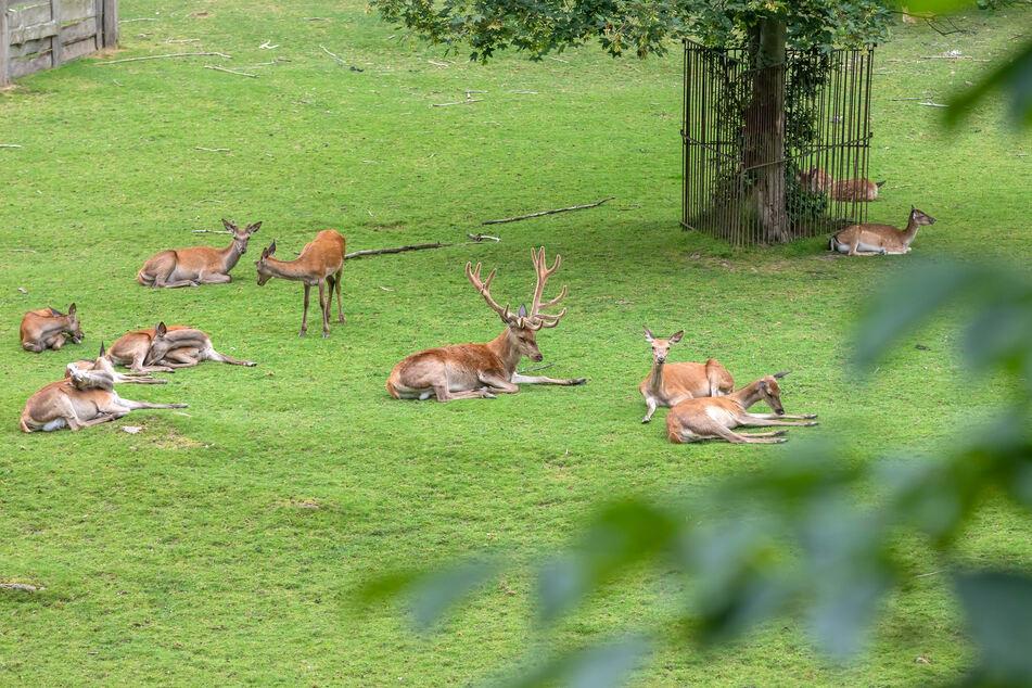 Im Tierpark Hirschfeld leben mehr als 600 Tiere.