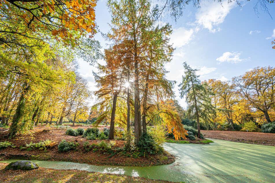 Bäume auf dem Friedhof Ohlsdorf leuchten im Sonnenschein in zahlreichen bunten Herbstfarben.