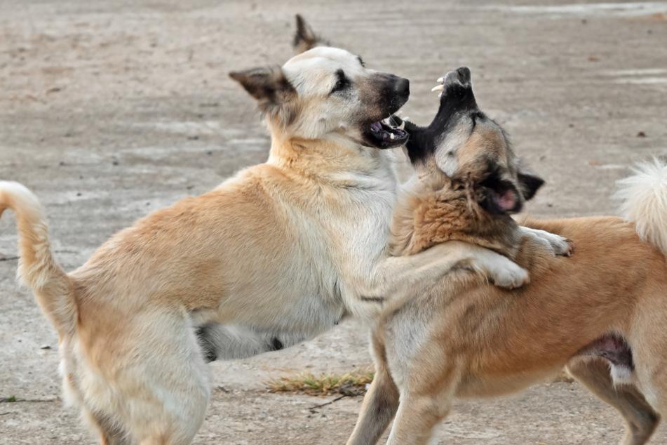 Verstörende Todesschreie: Hunde zerfleischen Jungen (†10) auf offener Straße