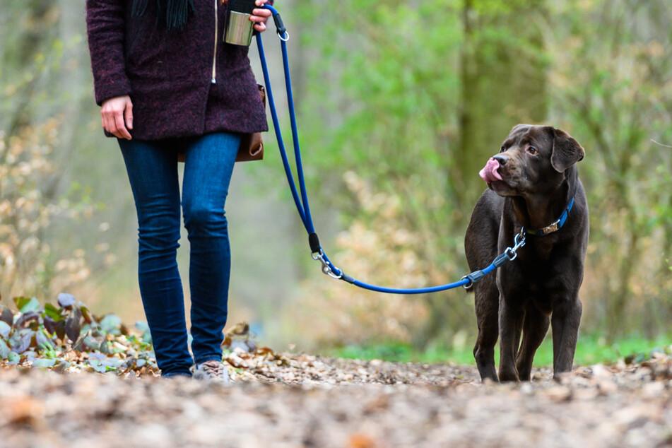 Mehr Hunde in Sachsen-Anhalt registriert: Steigt auch die Zahl der Beißattacken?