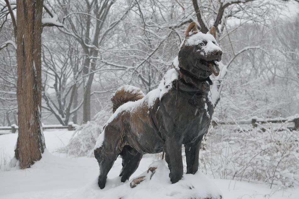 Eine Bronzestatue des Hundes Balto steht zu seinem Gedenken im Central Park in New York.