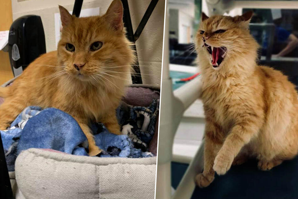 Animal shelter seeks family for grumpy cat, then a miracle happens!
