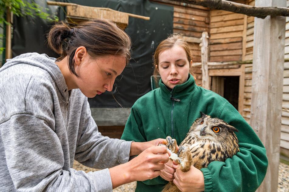Maria K. (r.) und Lara P. (beide 19) halten zu zweit die Stellung auf der Wildvogelauffangstation.
