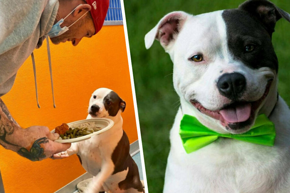 Duke has been living in the shelter for six years. Each year, the shelter advertises the dog with cute pictures.
