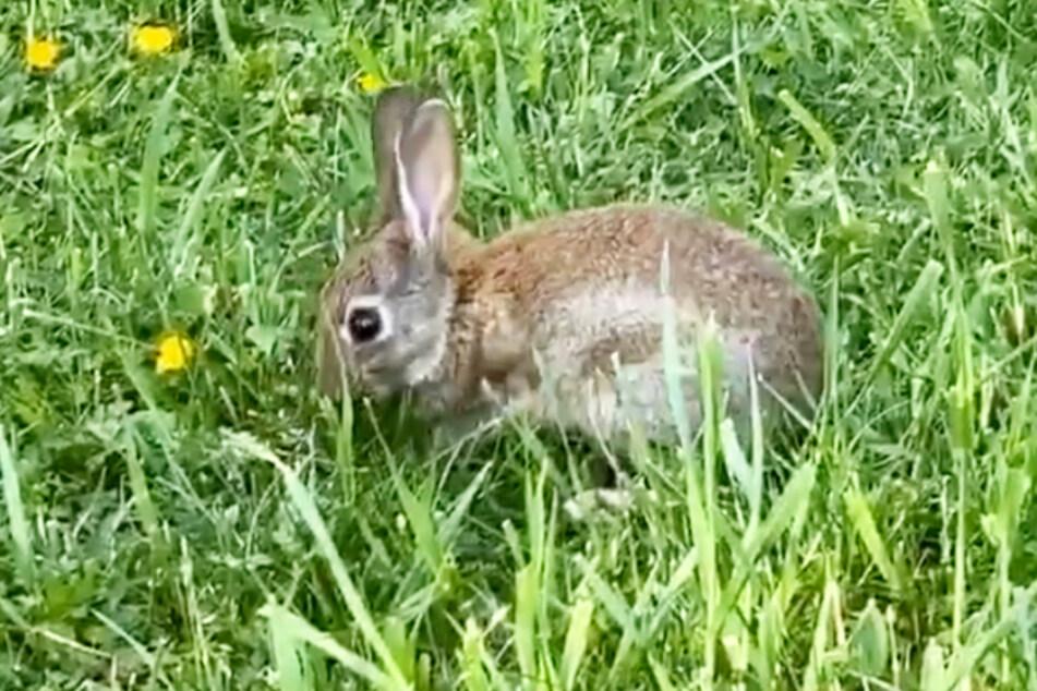 In einer Instagram-Story vom Freitag zeigte LeaLovesLifting dieses süßes Kaninchenbaby.