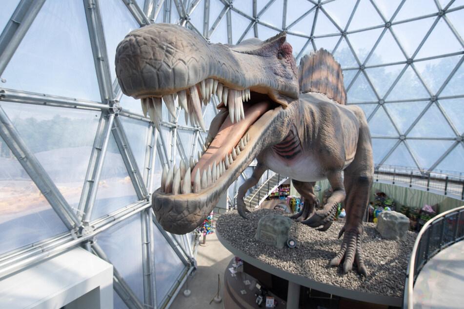 Das Modell eines Spinosaurus in Lebensgröße steht im Besucherzentrum des Saurierparks in Kleinwelka.