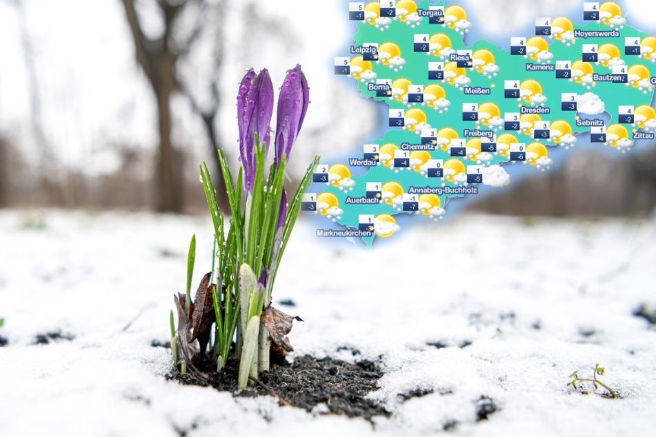 Frühlingsanfang im Schnee? So startet Sachsen in die neue Jahreszeit
