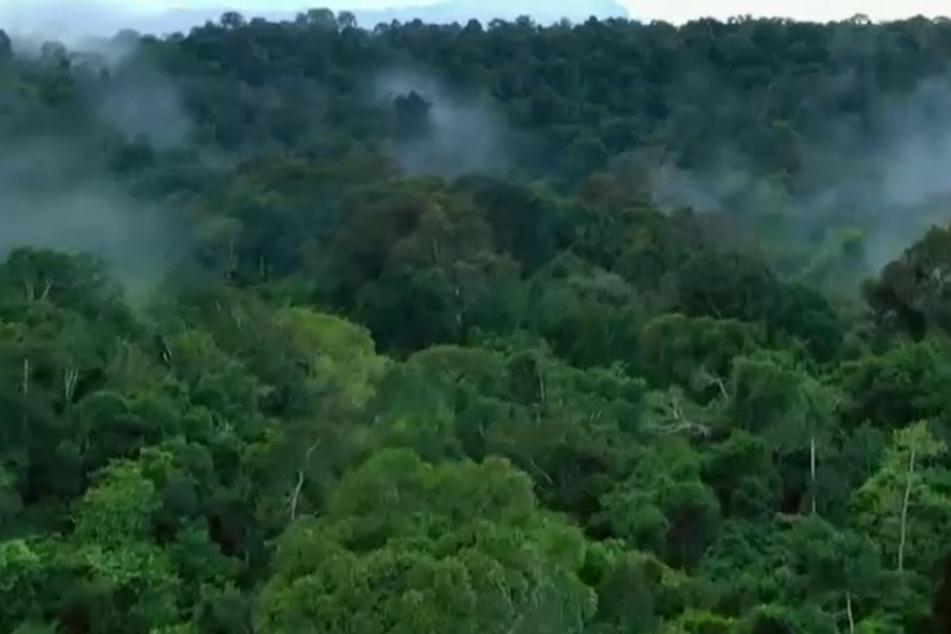 Die Bäume pumpen Wasser in den Himmel - und gestalten so den Wasserkreislauf der Erde mit.