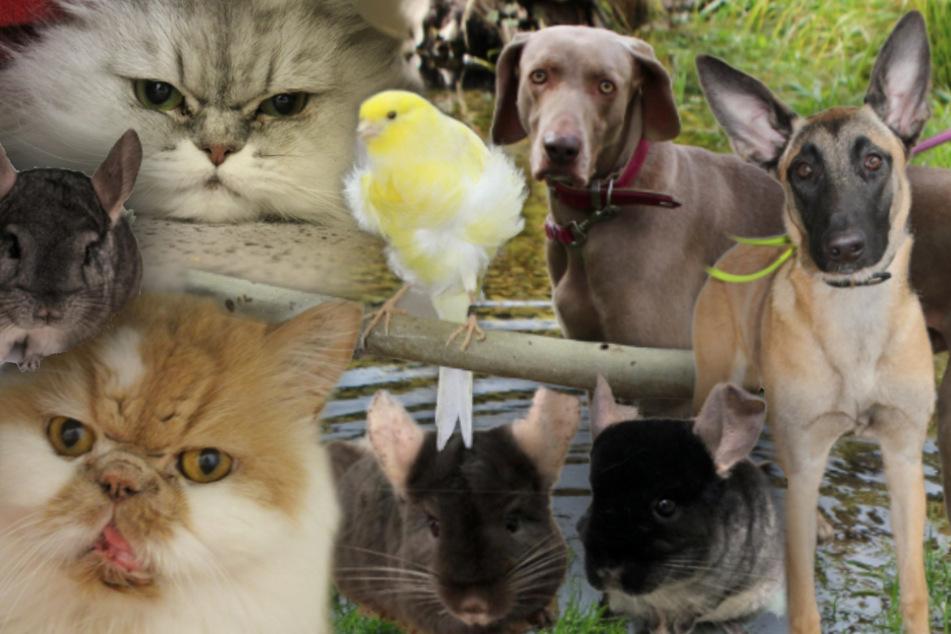 8 besondere Tiere: Hunde, Katzen, Vögel und Chinchillas suchen ein Zuhause