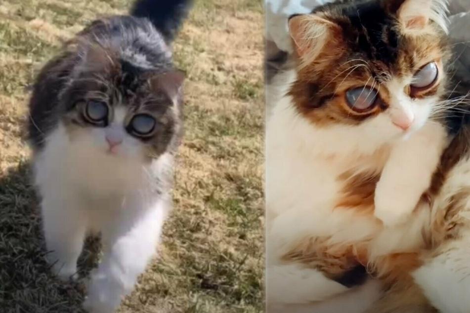 "Cute cat with huge ""alien eyes"" has a tragic backstory"