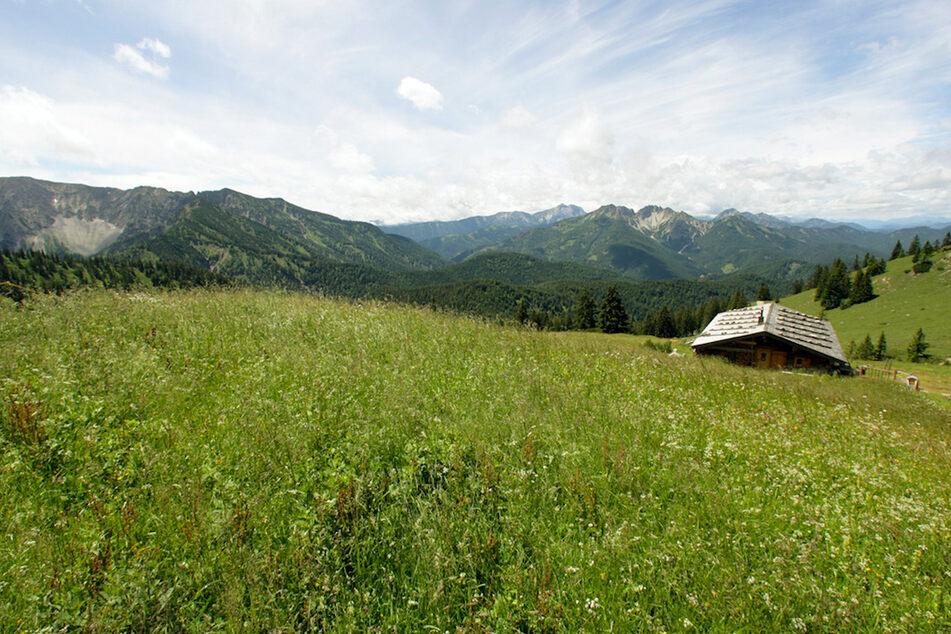 """""""Die Alm"""" kehrt zurück: ProSieben lädt ins Bergidyll zwischen """"Promischweiß und Edelweiß"""""""