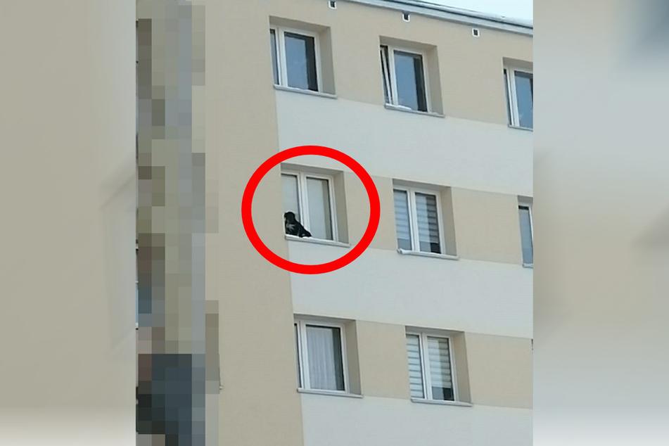 Der kleine Hund musste auf einem Fensterbrett in der neunten Etage ausharren.