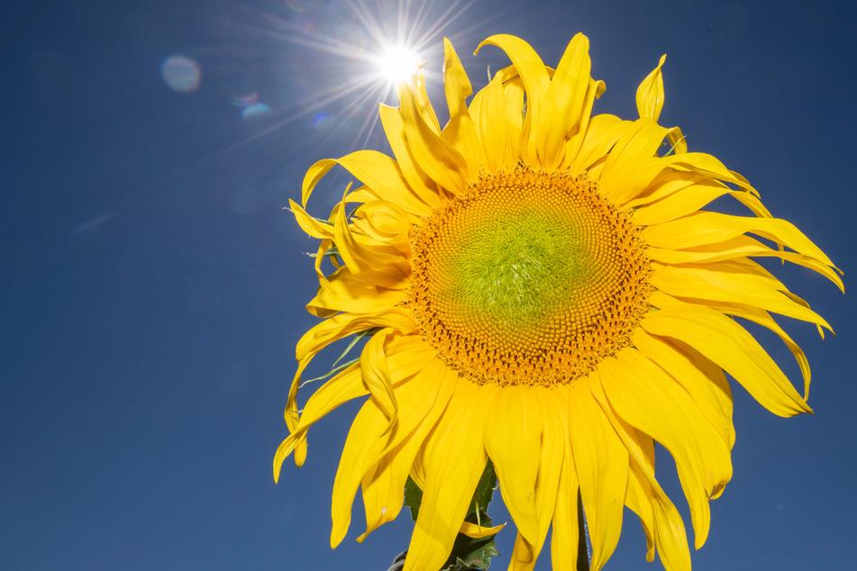 Sommer, Sonne, Hitze: Heute war der heißeste Tag des Jahres! Diese Marke wurde erreicht