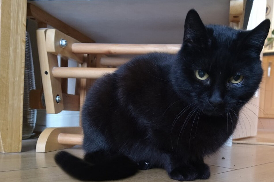 Family misses their black cat for years, then their luck suddenly turns!