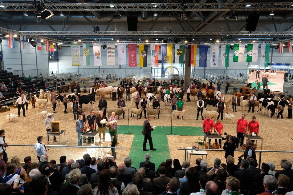 Messehallen voller Tiere - das war die Landwirtschaftsausstellung 2019. In diesem Jahr wurde sie abgesagt.
