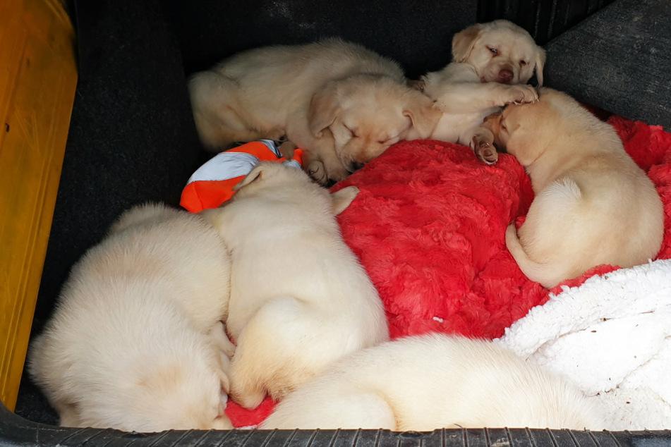 Auf einem Parkplatz an der A72 wurden sechs Hundewelpen sichergestellt.