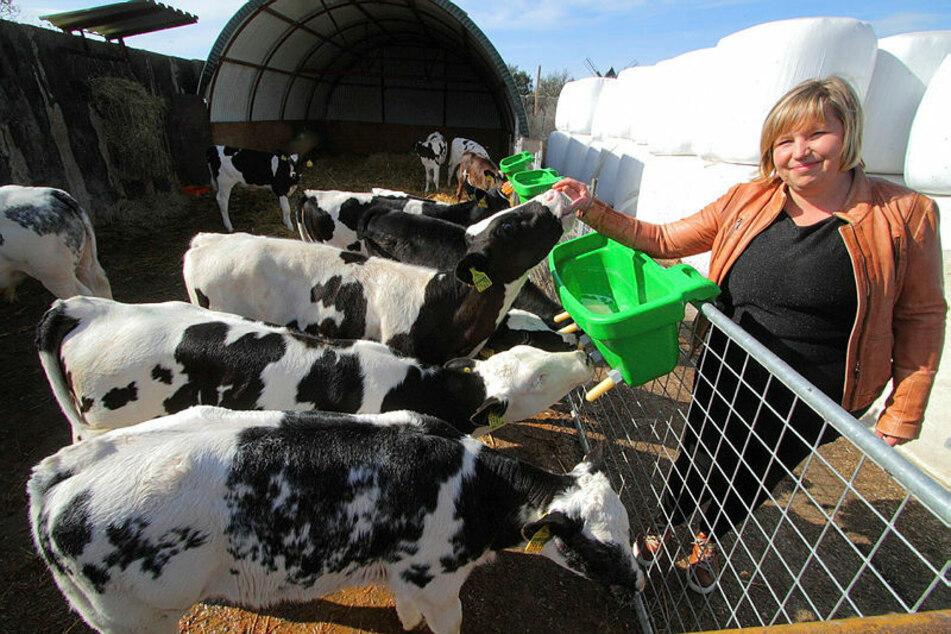 Auf dem Hof von Nadja Brummer (38, im Bild) und ihrer Cousine Lisa Kurth (33) stehen fast 260 Kälber, alles Weiß-Blaue Belgier. Die Kühe geben jährlich 2,1Millionen Liter Milch. Der Hof ist ein Familienbetrieb.