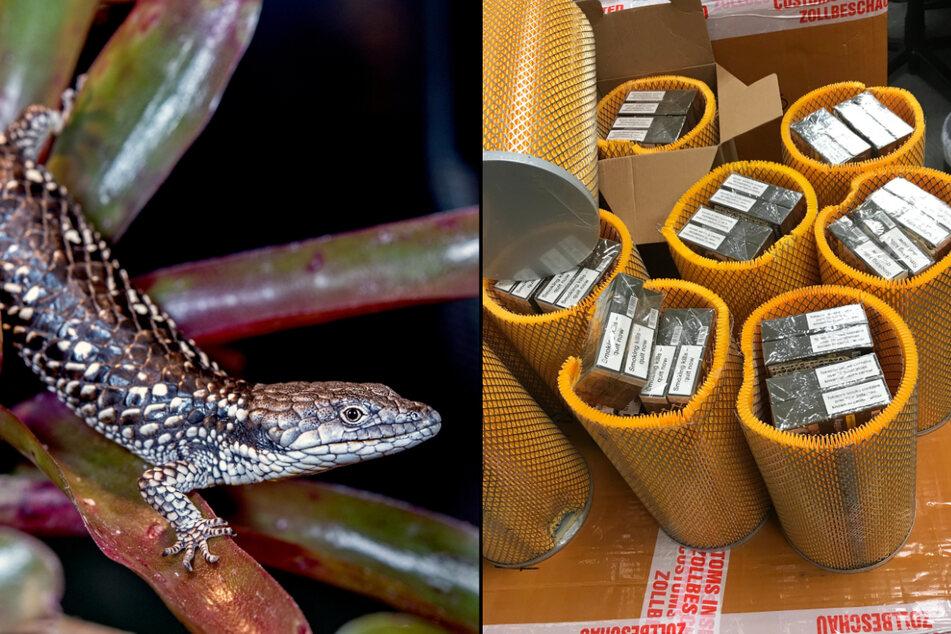 Viele geschützte Tiere, die nach Deutschland eingeführt werden sollten, stammen aus Mexiko. Auch für Zigaretten fanden Schmuggler teilweise kuriose Verstecke (z.B. in Luft- oder Wasserfiltern).
