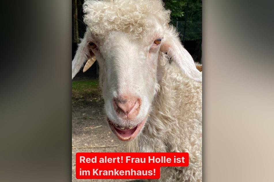 Frau Holle wird derzeit in einer Spezialklinik in Gießen behandelt.