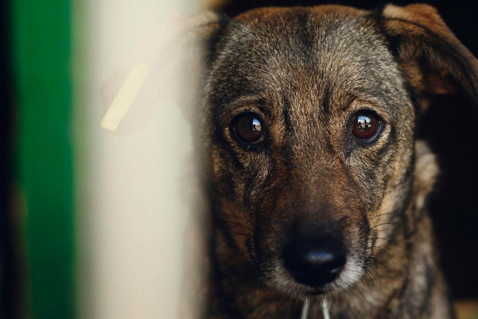 Traurig blickt ein Welpe durch die Gitterstäbe eines Käfigs (Symbolbild).