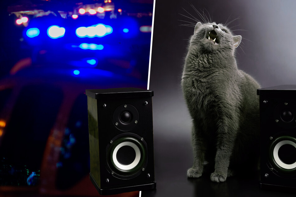 Katze löst Polizeieinsatz aus, weil sie zu laut Musik hört