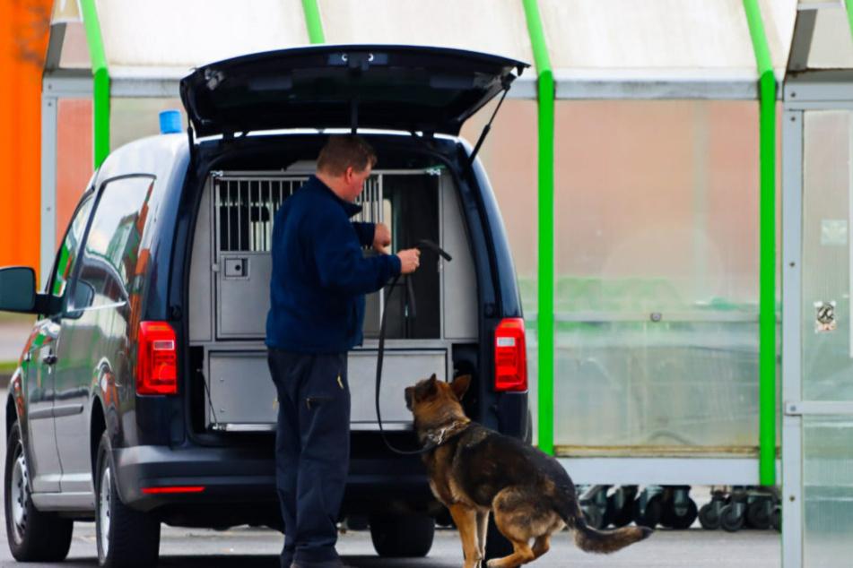Sprengstoffspürhunde durchsuchen das Gebiet.