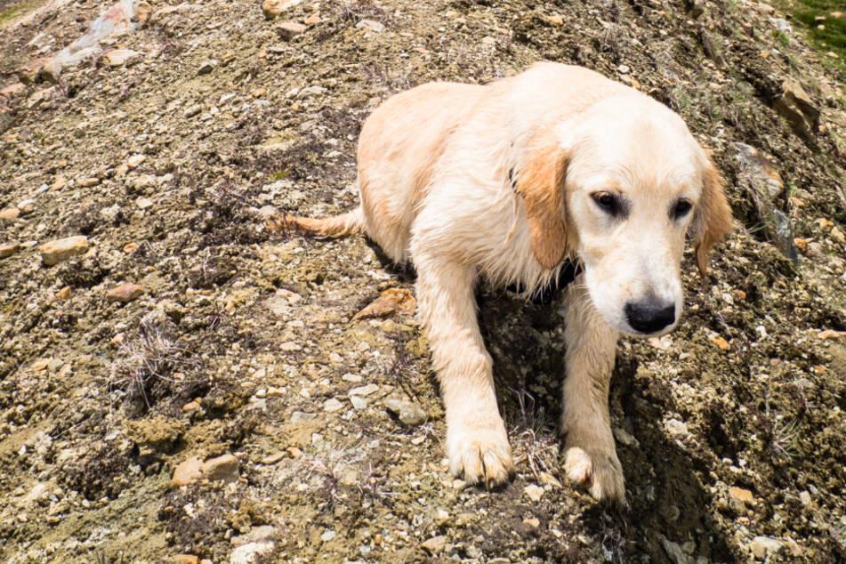 """Retriever """"Finn"""" stürzt 60 Meter in die Tiefe: Bergrettung seilt sich zu Hund auf Felsvorsprung ab"""