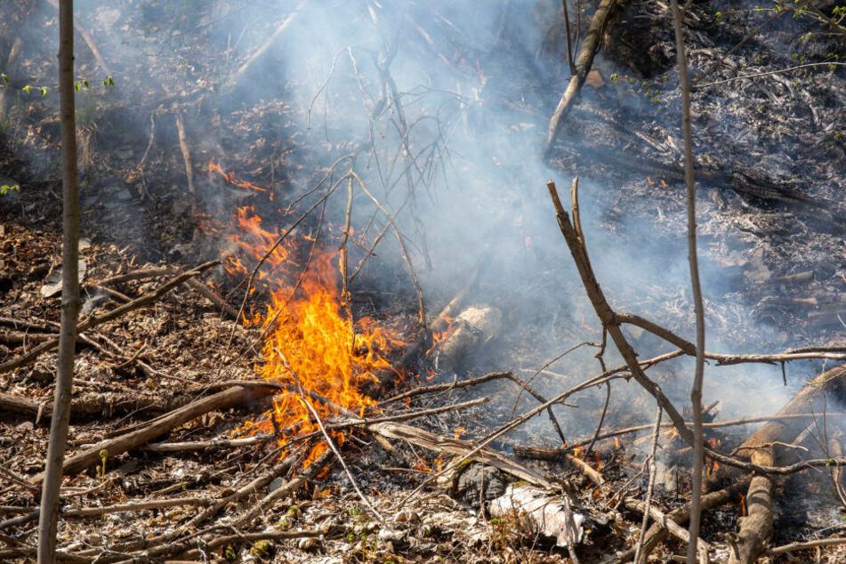 Bei Sehma brannte es auf einer Fläche von 20 mal 20 Metern.