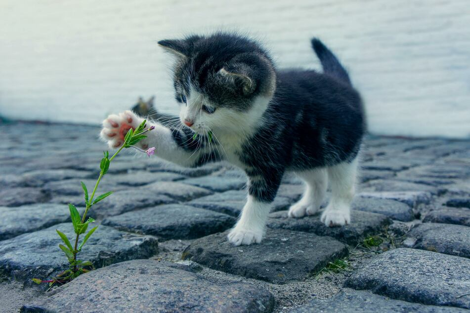 Don't introduce kittens to the outside world until they are at least four months old.
