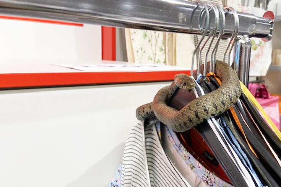 Schlange legt Betrieb in Klamottenladen lahm, bis die Polizei kommt