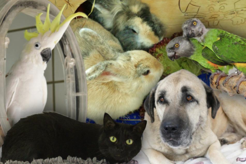 München: 7 besondere Tiere: Hunde, Katzen, Kaninchen und Papageien suchen ein Zuhause