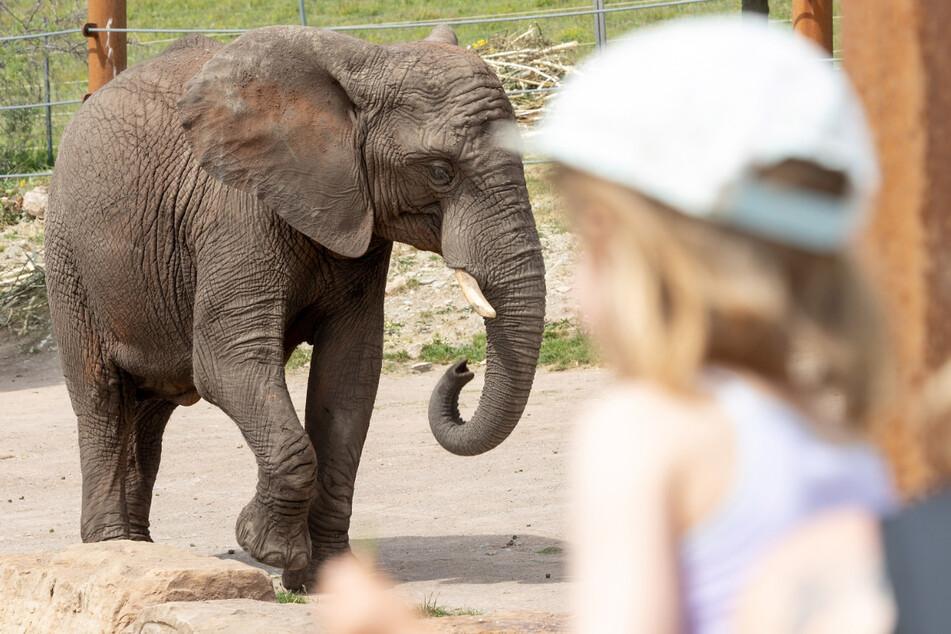 Am Weltkindertag bekommen Kinder bis 12 Jahre beispielsweise freien Eintritt in den Erfurter Zoopark. (Archivbild)