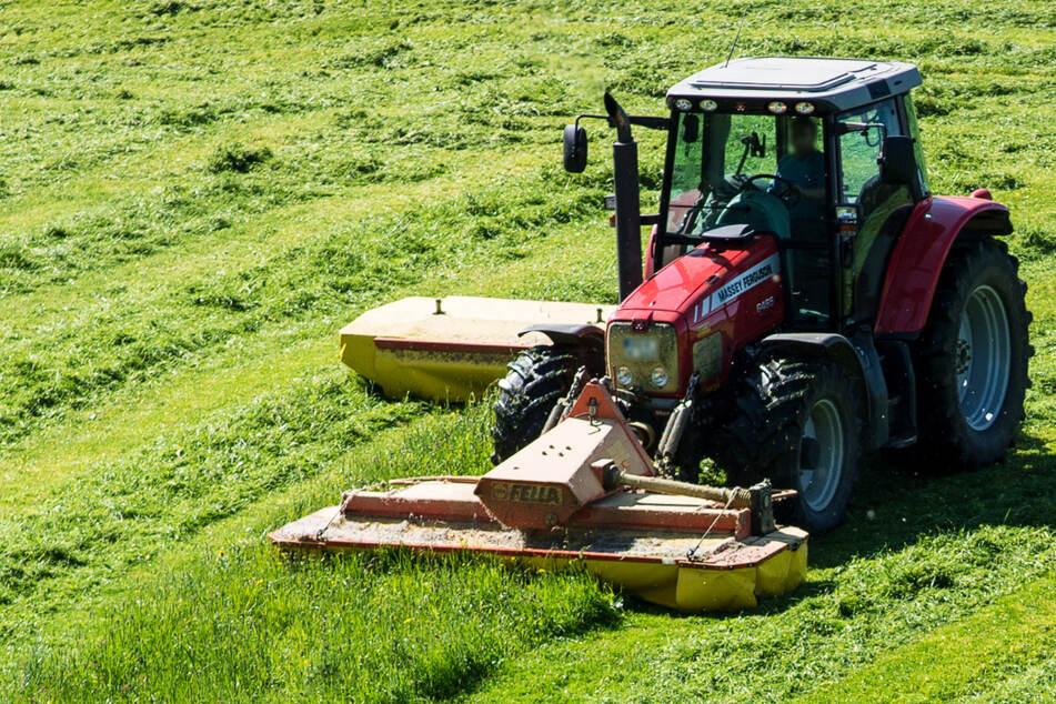 Gefahr für die Tiere: Landwirt darf wegen Party-Chaoten Ernte wegwerfen!