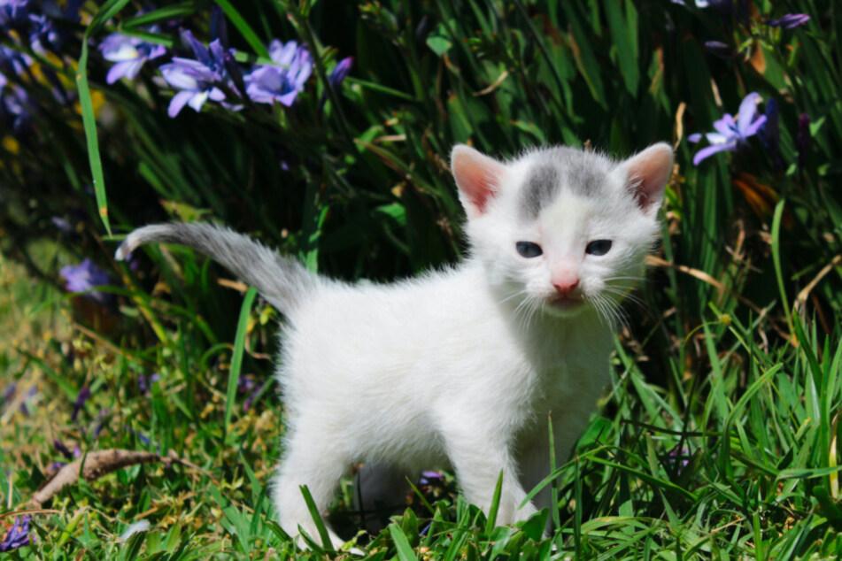 Maikätzchen: Vorsicht, wenn Du jetzt eine Katze kaufen willst!