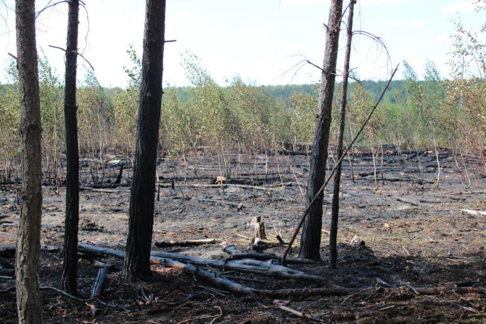 Grill löst Waldbrand an Campingplatz aus