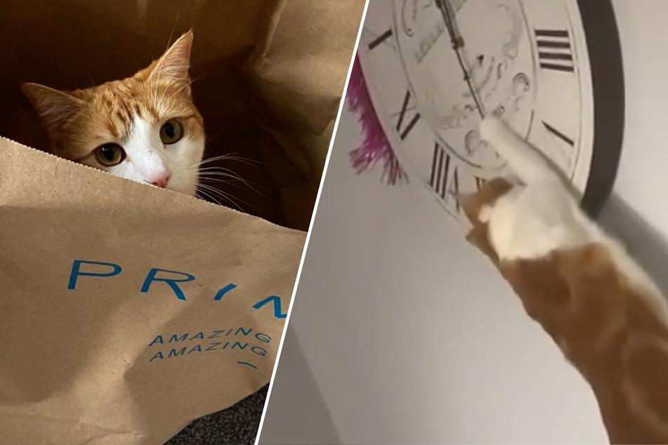 Frau denkt, dass Uhr kaputt sei, dann ertappt sie Katze auf frischer Tat