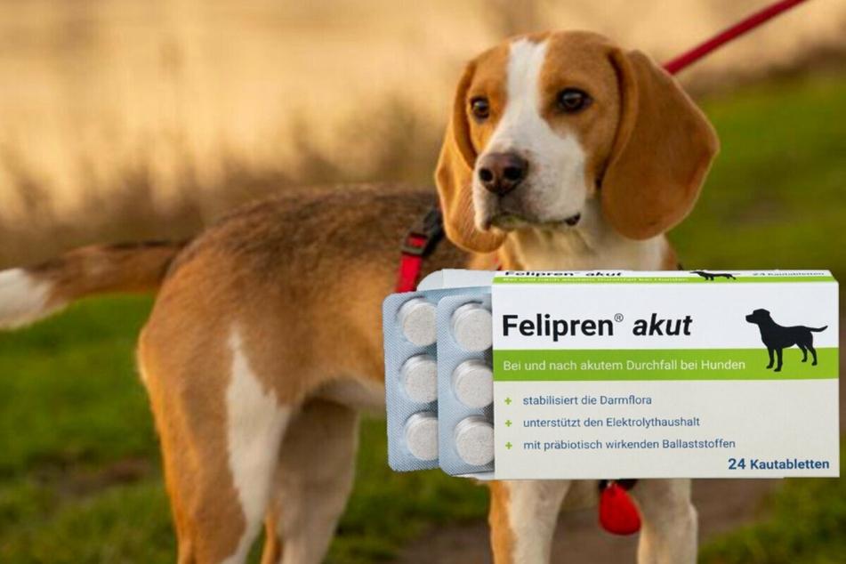 Was tun bei Hundedurchfall? Hilfe gibt es jetzt in der Apotheke