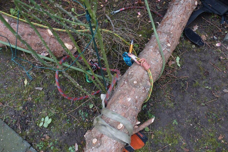 Beim Baumfällen: 30-Jähriger stürzt zehn Meter in die Tiefe und verletzt sich schwer