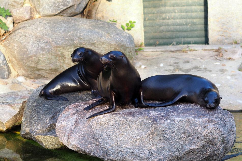 Das Trio scheint sich im Zoo Leipzig schon sehr wohl zu fühlen.