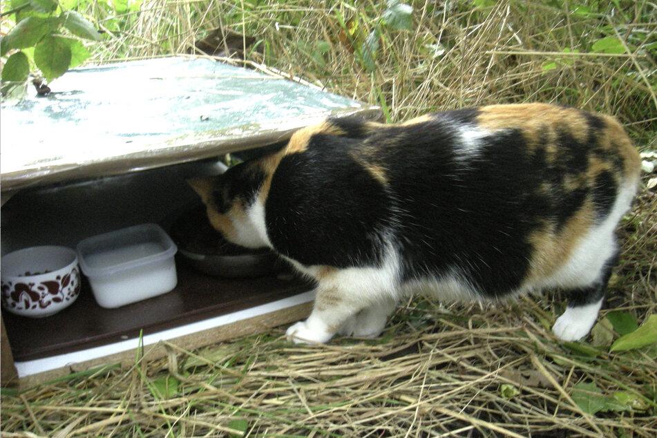 Eine wildlebende Katze an einer Futterstelle. (Symbolbild)