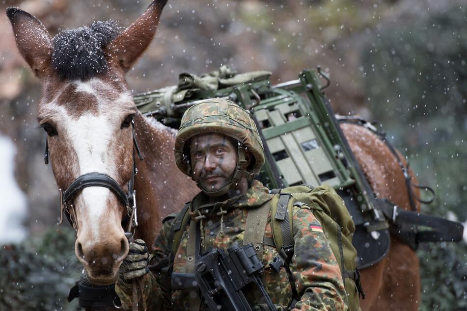 Um 36 Maultiere und 18 Haflinger in Bad Reichenhall kümmern sich 142 menschliche Betreuer.