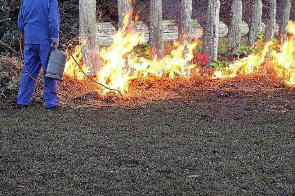 Opa fackelt mit Gasbrenner Zäune und Bäume ab...