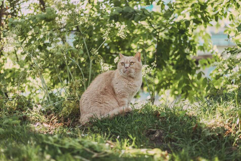 Cats like hiding in bushes and shrubs.