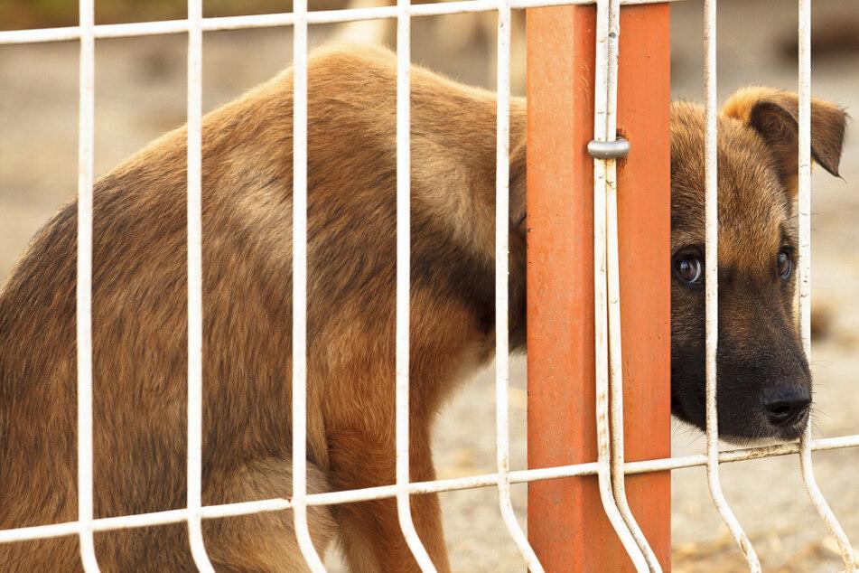 Der arme Hund wurde grausam missbraucht (Symbolbild).