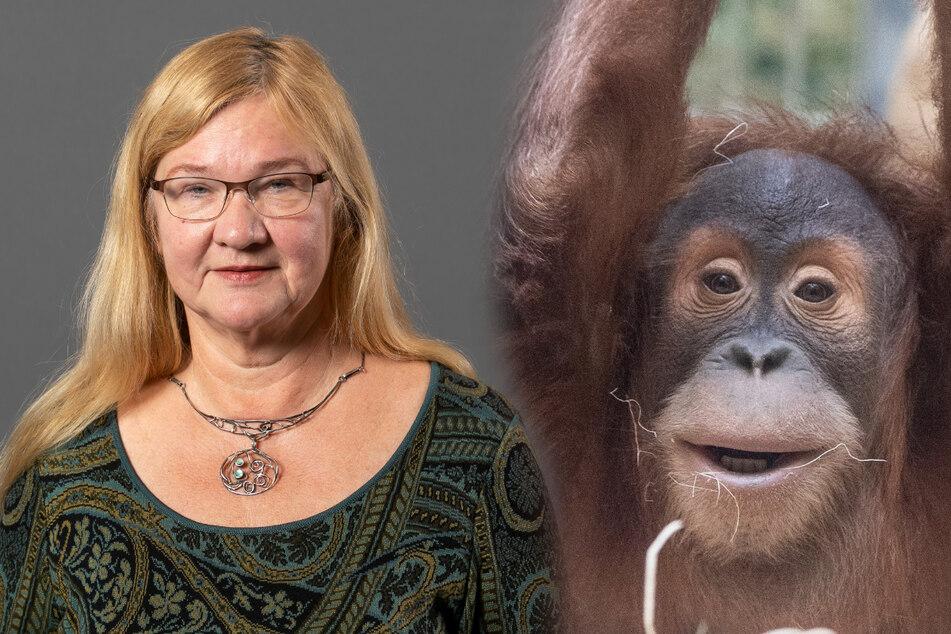 Dresden: Neue Orang-Utan-Anlage: Die Linke entdeckt ihre Affenliebe