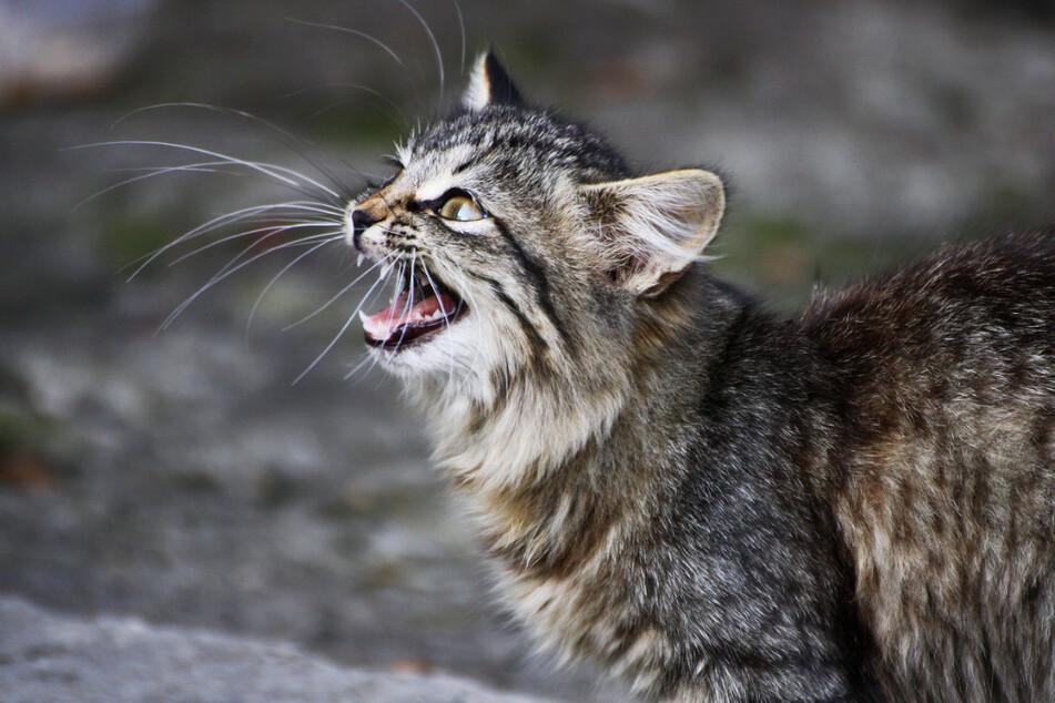 Mehrere Katzen wurden von den Polizisten erschossen. (Symbolbild)