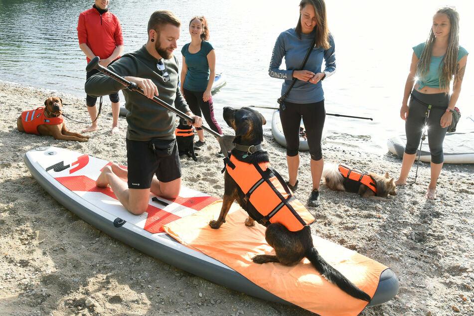 Trainerin Monique (2. v. rechts) zeigt, wie man den Hund am besten aufs Board bekommt.