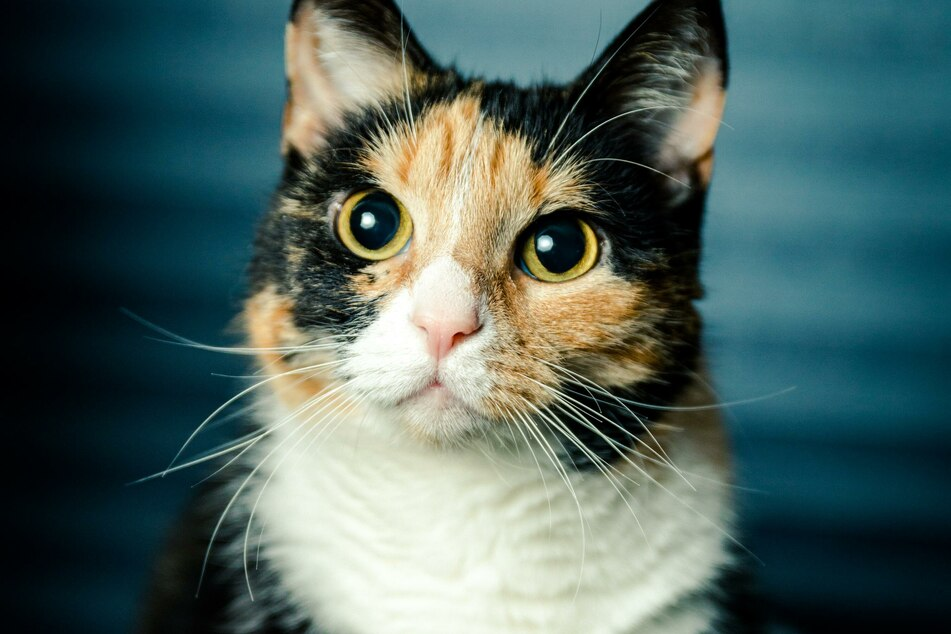 Glückskatze: Diese Katzen sollen Glück bringen